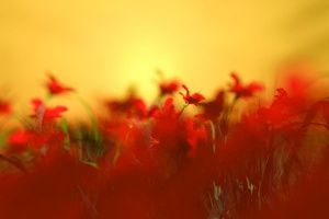Thumbnail of featured Artwork: Red Flower