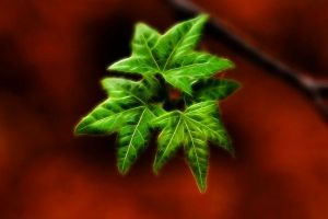 Thumbnail of featured artwork by members: Foliage